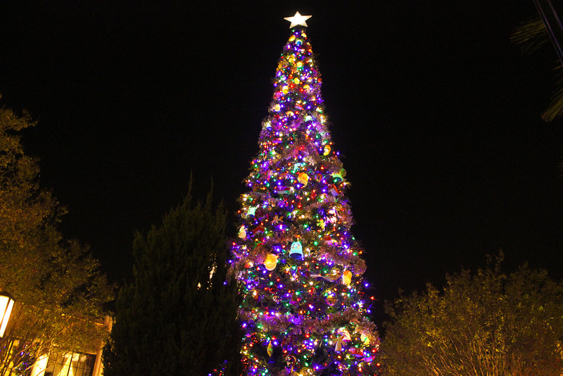 Here is the Christmas Tree on Buena Vista Street.